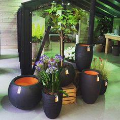 Get inspired by Capi Tutch. Visit our website for more inspiration. #gardening…