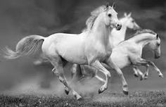 Resultado de imagen para white horses