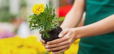 Plant a Flower Day - March 12