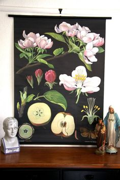 Apple Tree Botanical Wall Chart from burkedecor.com