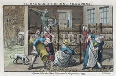 Silkworm farm, showing interior of rearing house or Magnangerie and collection of mulberry leaves.The Universal Magazine, London, 1753. Engraving.