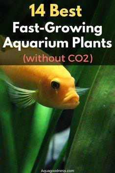 14 Best Fast Growing Aquarium Plants (without - In this article, I have sh. - 14 Best Fast Growing Aquarium Plants (without – In this article, I have shared with you 14 - Planted Aquarium, Aquarium Garden, Tropical Fish Aquarium, Live Aquarium Plants, Diy Aquarium, Aquarium Design, Marine Aquarium, Aquarium Fish Tank, Aquarium Setup