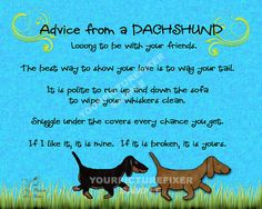 Dachshund advice: you should listen, they are smart.  #dachshund :)