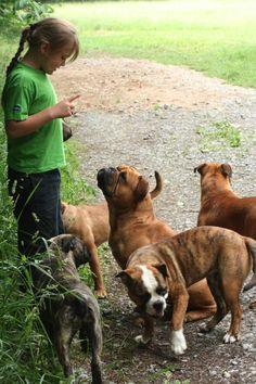 Aaron in der Hundeschule... www.asgards-pride.com