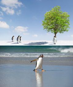 Animals, penguins, trees, photos, snow, ice