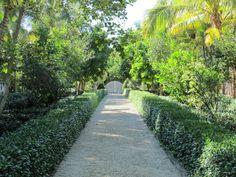 Lush driveway
