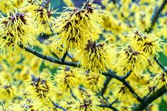 15 Low-Maintenance Shrubs - This Old House Fast Growing Hedge Plants, Rain Garden Design, Japanese Barberry, Plants That Repel Bugs, Landscaping Shrubs, Landscaping Design, Tall Shrubs, Low Maintenance Shrubs, Hydrangea Quercifolia