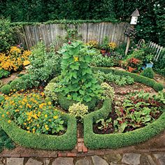 The centerpiece of Linda's potager is a vegetable, herb, and cutting garden divided into four quadrants and framed by a 'Wintergreen' boxwood hedge. The beauty of the hedge is that it brings order to garden chaos.