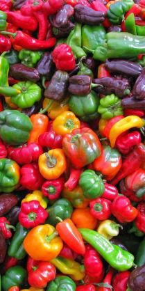Peppers - both sweet and spicy - are harvested in late summer and early fall. They are a good source of Dietary Fiber, Vitamin A, Vitamin C, Vitamin E and Potassium.