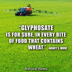"""Glyphosate is for sure, in every bite of food that contains wheat."" ~ Nancy S. Mure"