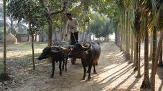 Satanipara, Bokshigonj, Jamalpur, Bangladesh