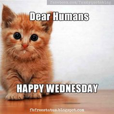 Funny Wednesday Memes, Happy Wednesday Quotes, Sunday Quotes Funny, Funny Memes, Hilarious, Wednesday Greetings, Wonderful Wednesday, Wednesday Morning, Morning Quotes