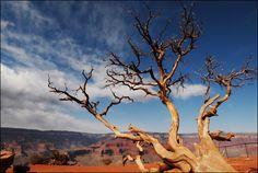 Cool tree~ Love photography!