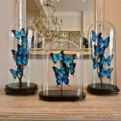 The Butterfly Project : Add personality to your home with DIY butterfly frames. – The Interior Perspective Butterfly Room, Butterfly Project, Butterfly Frame, Butterfly Crafts, Blue Butterfly, Diy Butterfly Decorations, Quince Decorations, Quinceanera Decorations, The Bell Jar