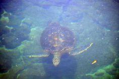 Tortoise. Galápago Island. Ecuador.