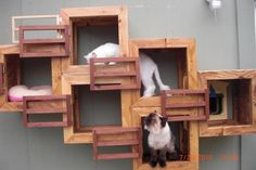 a lovely cat condo made from reclaimed wood