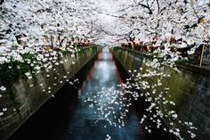 📍 Meguro-kawa - 📸 Dianne Lynette | Discovered via Mustsee - http://mustsee.earth