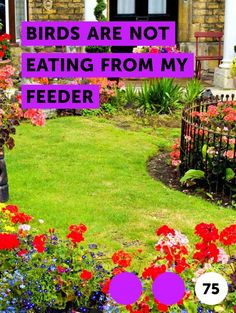 Learn How to Remove Turf Grass With a Sod Cutter Mulch For Vegetable Garden, Planting Vegetables, Ivy Plants, Bamboo Plants, Flowering Plants, Grape Tree, Grape Vines, Katsura Tree, Sod Cutter