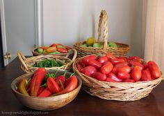 Tomatoes and pepper harvest - Homegrown Delight