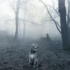 Irish wolfhound- Dante