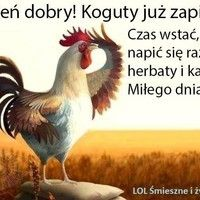 Dzień dobry! Koguty już zapiały Lol, Humor, Animals, Roosters, Blessings, Thursday, Polish, Good Morning Friends, Gud Morning Images