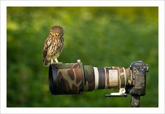 """500px / Photo """"With Canon, you can"""" by Jules Cox  owl lens"""