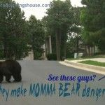 Bears, Fox, Deer, Coyote, Mountain Lion…Wildlife on the West side of Colorado Springs