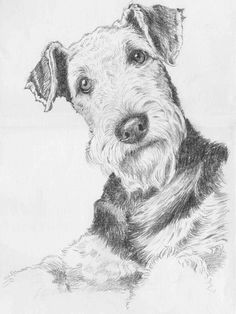Uplifting So You Want A American Pit Bull Terrier Ideas. Fabulous So You Want A American Pit Bull Terrier Ideas. Fox Terriers, Airedale Terrier, Perro Fox Terrier, Irish Terrier, Wire Fox Terrier, Pitbull Terrier, Dog Spaces, Vintage Dog, Dog Paintings