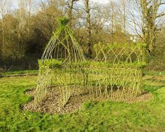 Willow House Sprouting, by Ian Haycox. Almost all willows take root very readily from cuttings or where broken branches lie on the ground.