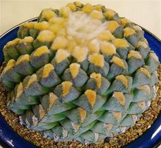 Cactus and Succulents 403
