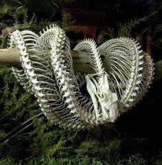 Animal Skeletons, Animal Skulls, Buzzfeed Animals, Animal Bones, Young Animal, Vulture, Skull And Bones, Green Trees, Memento Mori