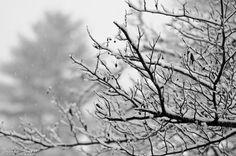 Winter wonderland II - 26 Dec 2012 first snowstorm of the season Ohio