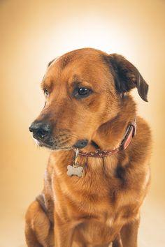 Hundefotografering med Basse - En fantastisk eldre herremann med en dødsrå attitude — Hundefotograf Pål Hodne - Hundefotografering i Østfold