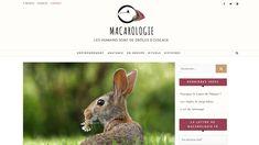 Site pour le webzine Macarologie - Conception et création du site par L'insufflerie Rabbit, Animals, Environment, Rabbits, Home Made, Bunny, Animales, Animaux, Bunnies