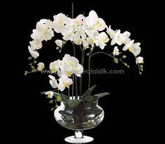Silk white Phalaenopsis Orchid