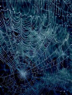 so many webs we create