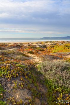 Grover Beach dunes by www.centralcoastpictures.com