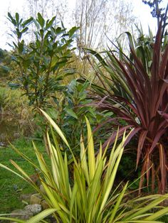 Cordyline 'Red Fountain' pseudopanax, and Phormium Yellow Wave