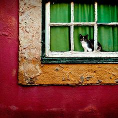 Green and red - Cat in Lisbon by Laurent Hunziker