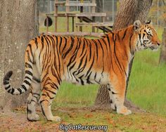 Kali Tiger is having a great day.  This beautiful girl just takes my breath away.Shout out your country or state.