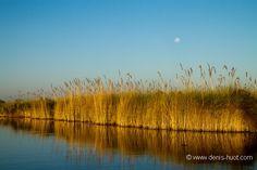La Galerie - Christine et MichelDenis Huotphotographes animaliers - - delta de l'Okavango - 31168
