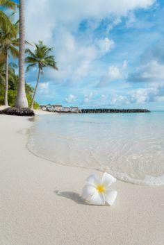 Closeup photo of a lone flower on a tropical beach Ocean Wallpaper, Summer Wallpaper, Wallpaper Backgrounds, Wallpaper Awesome, Summer Backgrounds, Pink Wallpaper, Wallpaper Quotes, Iphone Wallpaper, Summer Pictures