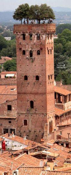 Guinigi Tower – Lucca Tuscany | Italy