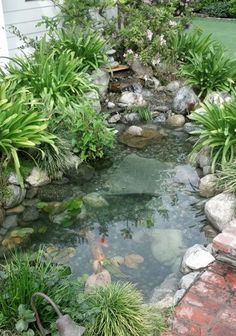 Garden pond - PacificPonds.com - Pond building Ideas - This pond is not made for large koi but is fine for goldfish and other critters.