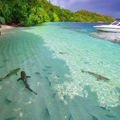 Save shark!! Lokasi : Raja Ampat, Papua Barat Upload bersama @instanusantara #instanusantara #instanusantarasemarang #Inub6811