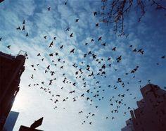 #gorillapodlove  sky, blue sky. crt87