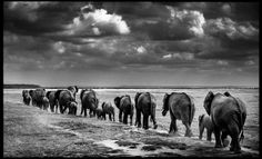 Photo Crossing the plain II - Laurent Baheux | 91*150 = EUR 455 | 110*180 = EUR 1220