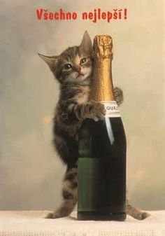 Happy New Year Quotes, Quotes About New Year, Cat Party, Cute Images, Baby Animals, Alcoholic Drinks, Happy Birthday, Kitty, Bottle