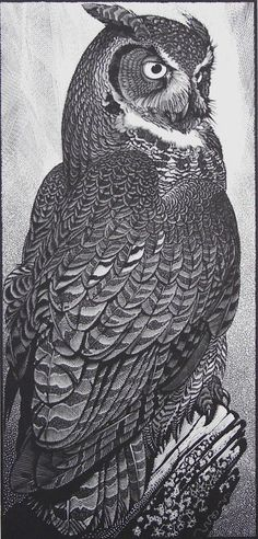 Colin See-Paynton : Great Horned Owl at Davidson Galleries