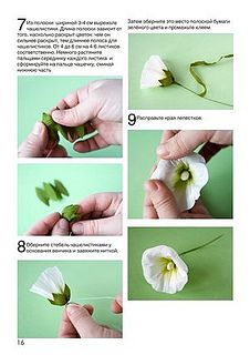 страница 17   Flickr - Photo Sharing! paper mallow flower